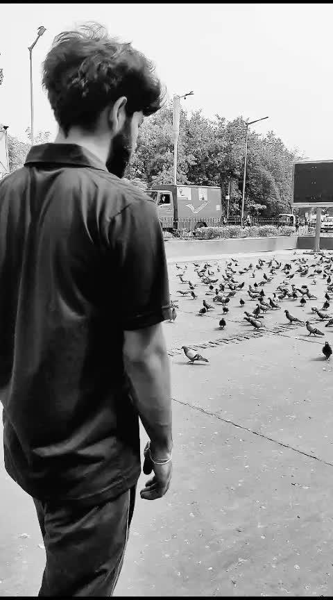 Ek pal mein hi tham gaya💕  #slowmo #slowmotion #slowmotionchallenge #roponess #roposo  #roposoers #risingstaronroposo #ropo-video #slomotionmay #nature #birds #cp #delhi