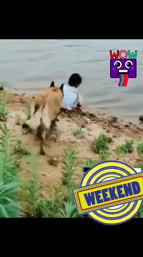 dog helps