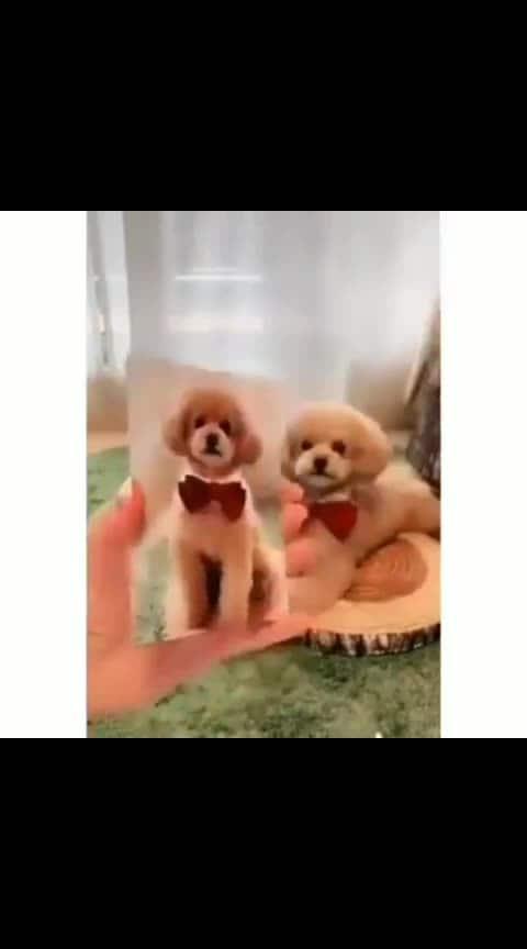 #dogstagram