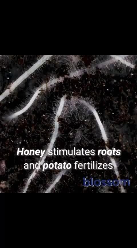 plantgrowth🌱🌴🌳 #ropo-style #plants #growthhacking #creative-hacking #new-new-idea