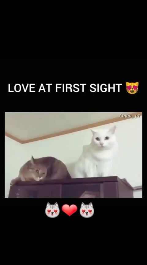 #cat  #cats #love  #-lover  #first-love #pussycat