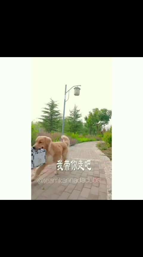 #dogs_of_instagram