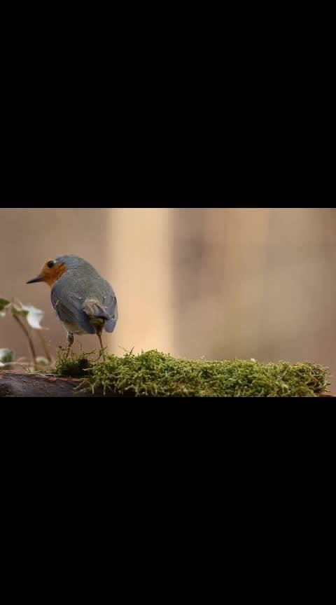 beutifull bird.....Love bird
