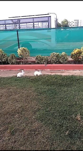#dildediyahai #rabbitlove #heart-break