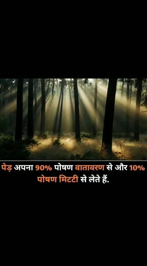 #tree_magic #facts