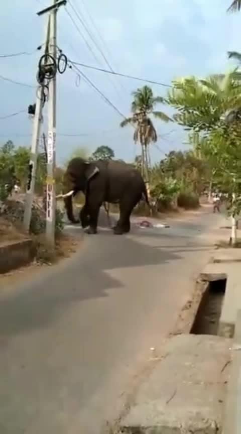 crazy elephants #elephant #craziness #crazysexycool #elephanttapestry #1millionauditionindia #likeforfollow