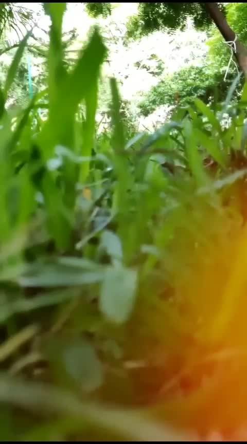 grass forest...