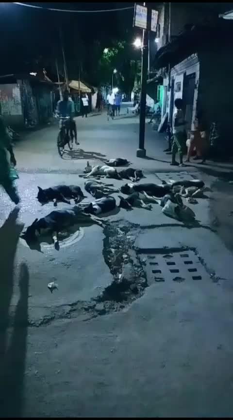 biggboss3 Telugu #dogsofinstagram   reacting dogs