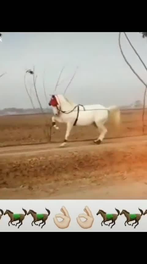 #horsepower  #risingstar  #dance