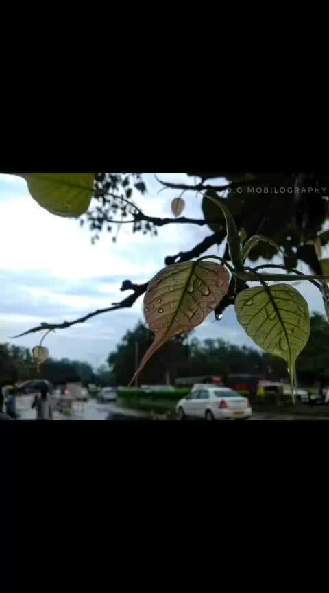 New leaves of freshness in the usual humdrums..... #yourshotphotographer #nature #tree #meicapicture #naturemobilography #citylife #cityscape #streetphotography #monsoon  #afterrain  #picoftheday #afternoon #viewbug #foap #MyPixelDiary #photography #mobilephotography  #mobileshots #samsung #samsungj2pro  #yourshotphotographer #nature #meicapicture #justgoshoot #picoftheday  #photography #mobilephotography #samsungj2pro #wanderlust #InstaGoodMyPhoto #AbstractShot #amateurphotography #wanderlust #instagood #instadaily #myclicks😊😎