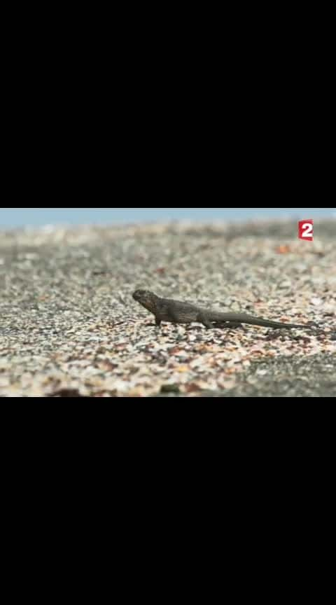 #2#This iguana is a freaking survivor (snakes)