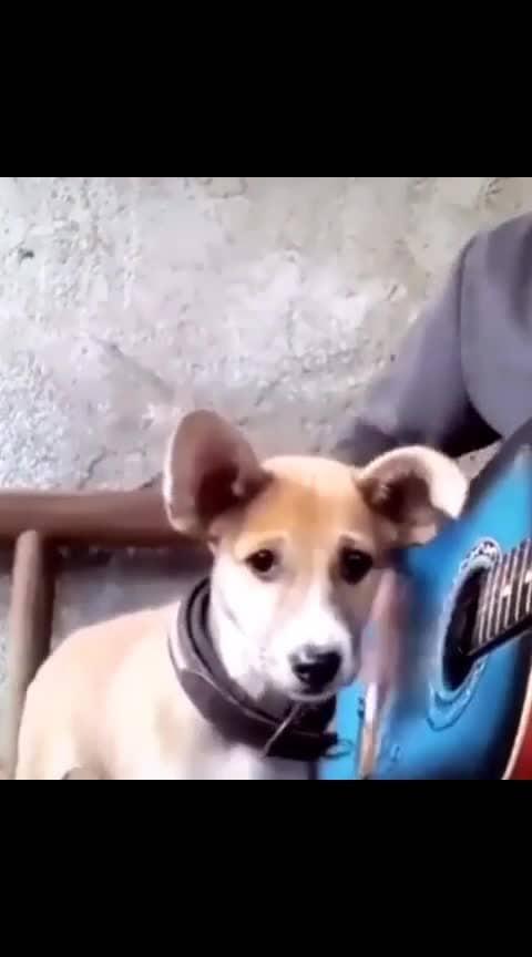 #singingstar #doggystyle