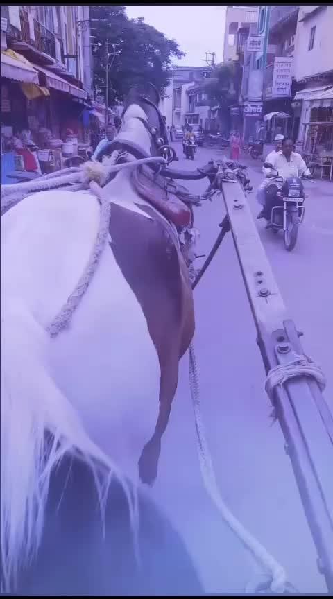horse#horseriding #horsefeel #horse