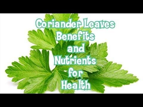 Coriander leaves Benefits | Coriander leaves chutney | Coriander leaves growing at home