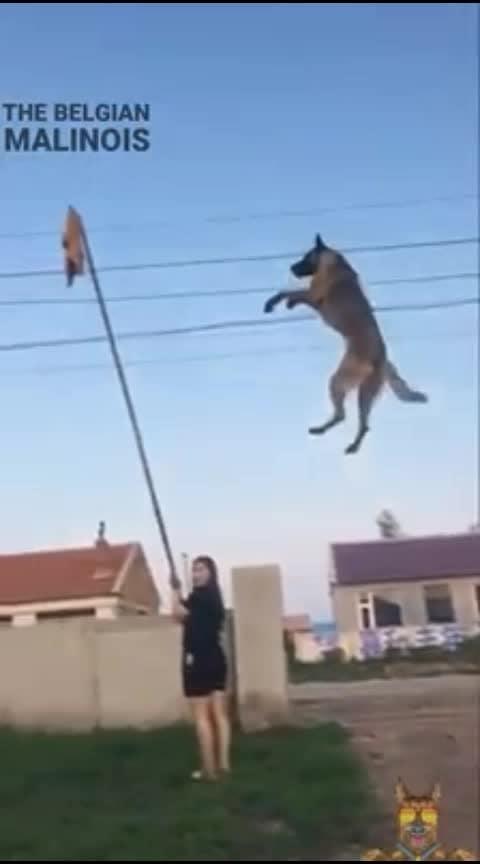 #dogsofinstagram