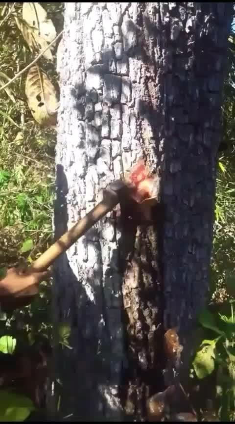 #tree_magic 🌳🌳🌳🌴🌴🌴