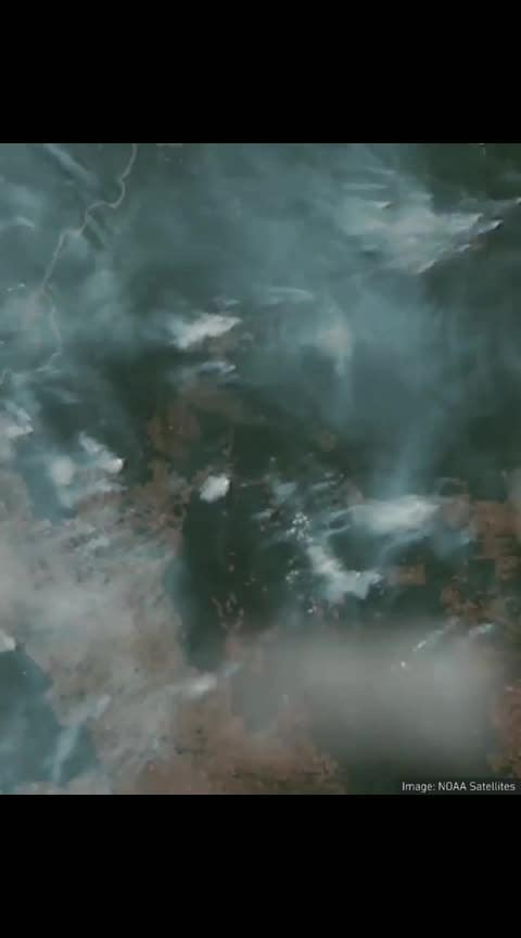 Amazon rainforest is on fire