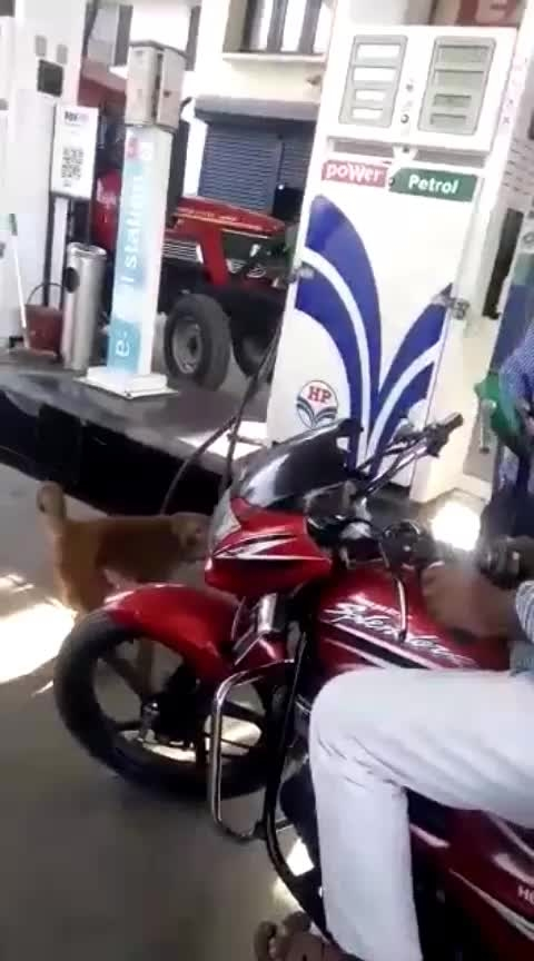 petrol cheking officer