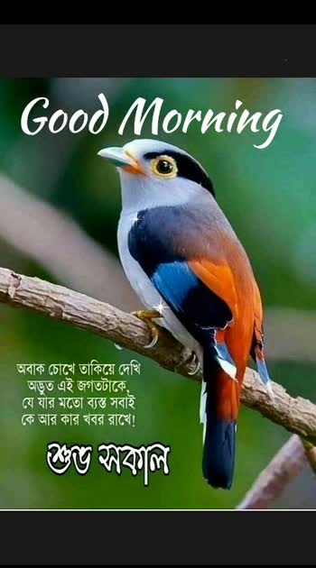#birdphotography