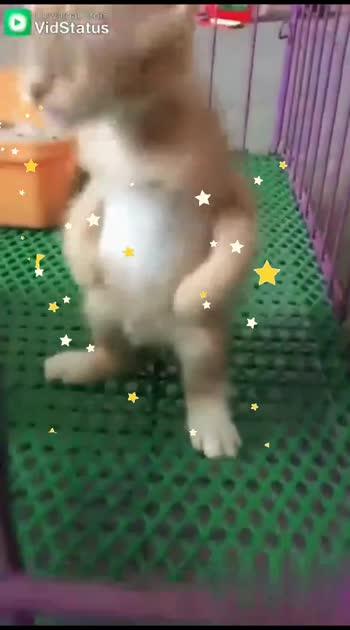 Cat # super cat