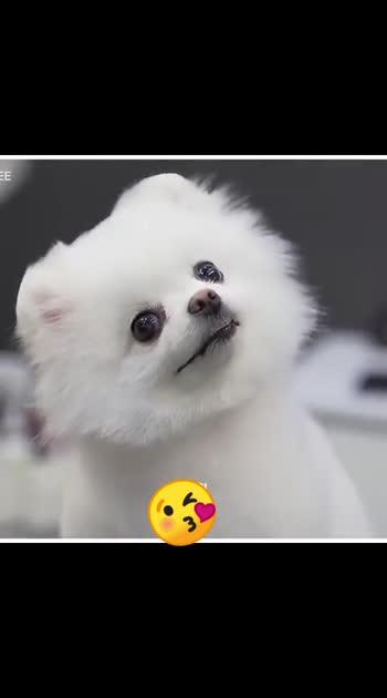 #doggystyle 🥰