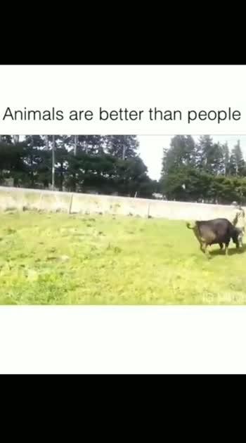 #animallovers