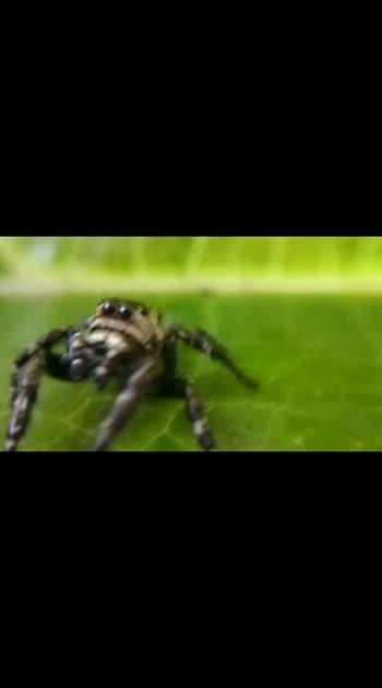 Macro Video • Spider #macro  #viral  #trendeing #viralvideo #macrophotography #roposostar #100likes