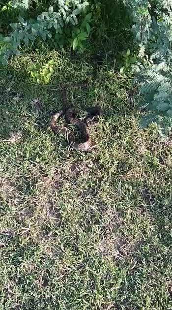 snake sleeping in shore