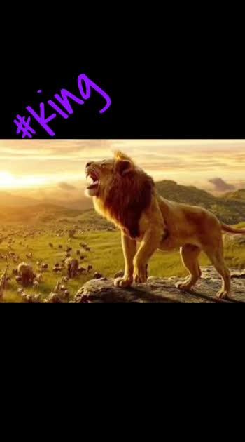 #gujju #lion #lionking #gujju_the_great #gujju #callforgujarati #roposocamera #roposo #roposostar #roposo-beats #roposochannel #roposocreativity #roposocreation #roposocontest