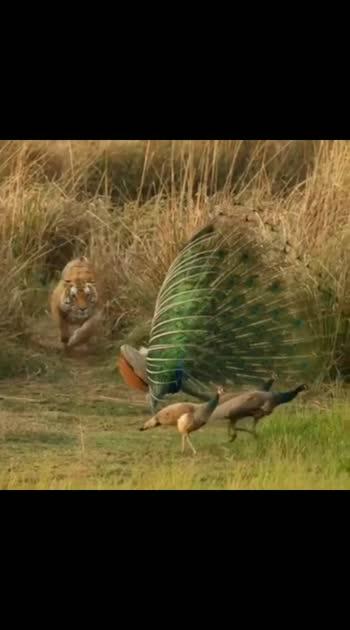 national animal vs national bird