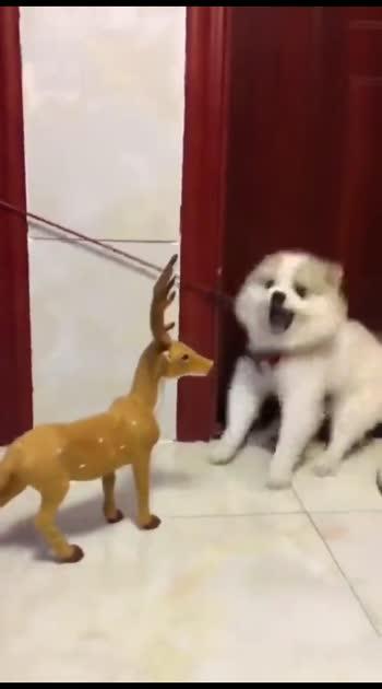 #funny_video  #petlove  #doglove  #instagram  #quet  #inocent