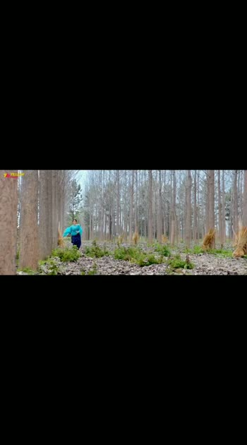 new movie doorvin new song Navi Navi#ninja  #wamiqagabbi ,🥰🥰🥰