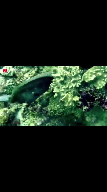 ¥£€₩ fish killing fish @#$%