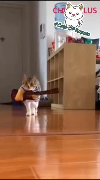 క్యాట్ వాక్🤗🤓 #cat  #catsofinstagram  #catvsdog