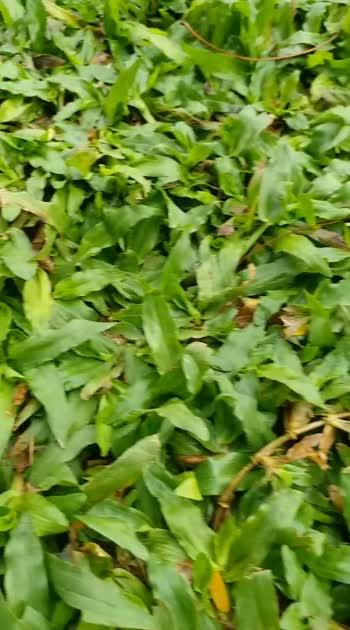 #greenery