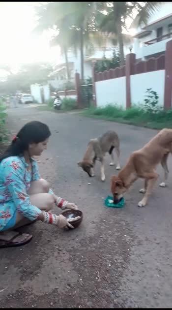 #featureme  #birthdaycelebrations  #newfriends .. . my birthday treat  to 7 dogs..