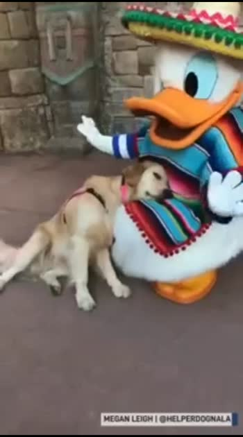 Autism service dog has special moment with Donald Duck