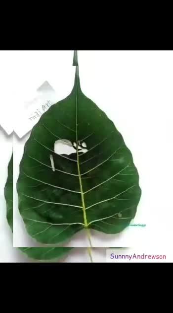 #trendingvideo  #prabhasdarling  #Leafart #prabhasfan  #SunnyAndrewsonPost