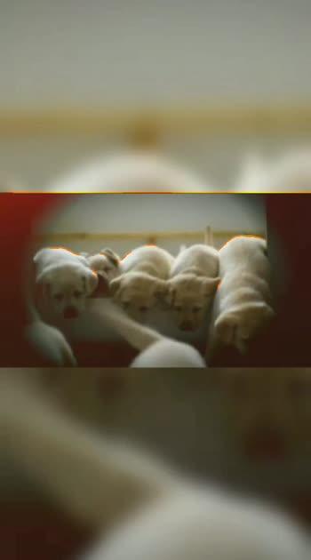 #dogs #dogsofinstagram #doglover #dogstagram #dogslover #dogslove #dogsitting  #dogsareagirlsbestfriend #dogsofroposo #dogstyle #dogsofropos #dogsb #dogshow #dogsave #dogs_love #dogsareafrnd