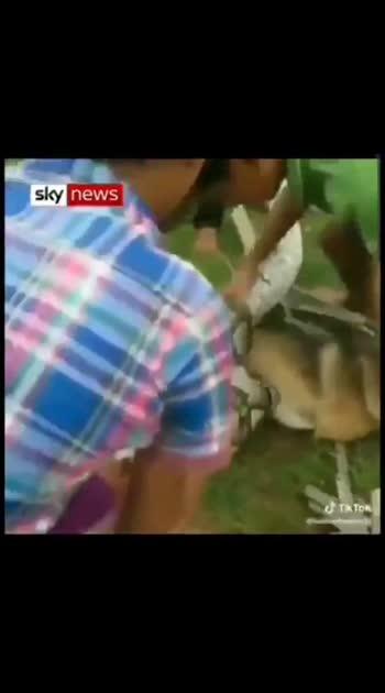 children's saved dog from python