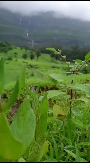 nature #nature