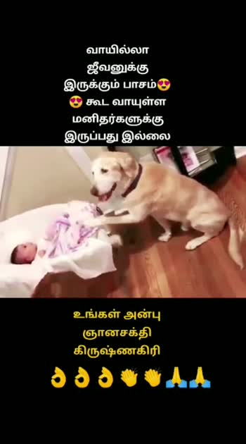 #doglover #doglover