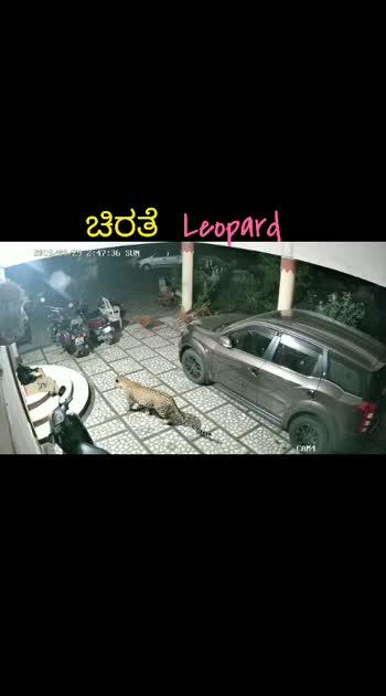 #leopard #ಚಿರತೆ