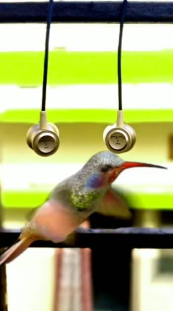 beautiful birds save BirDs