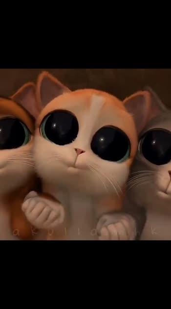 #catsofinstagram #catslover #cats
