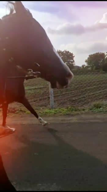 #horse #horsepower #horseriding