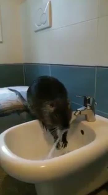 #rat #nook #book