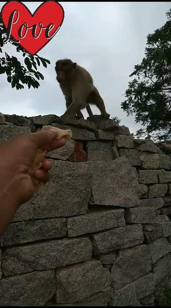 #villagevibes #animelove #monkeylove #foodie