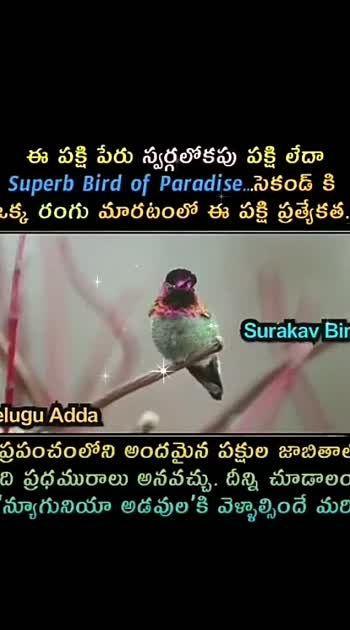 ##birdphotography
