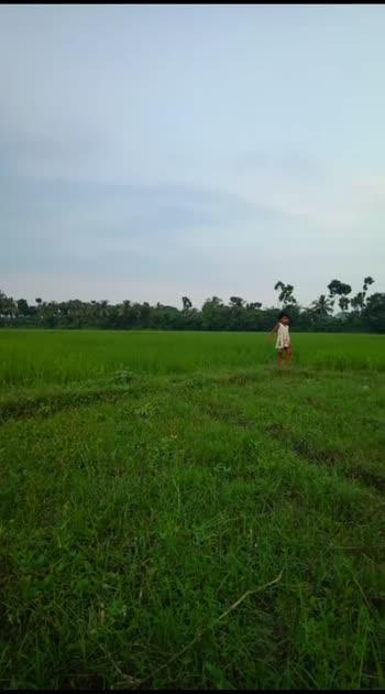 rice plot